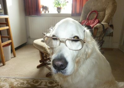 My dog Sava in a studious mood
