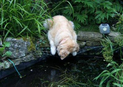 Our previous puppy Bracken was fascinated by fish!